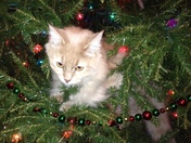 Christmas kitty in the Christmas  tree