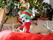 Diego (Santa Helper)