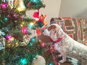 Sally Freckles watching for Santa