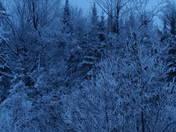 White tress----