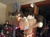 Having a very Merry Kitty Christmas