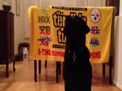 Teton  - Therapy Dog & Chow Hall Officer Salutes Pittsburgh Steelers & Everyone
