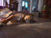 Cayenne...our rescued puppy