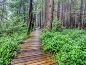 Trail In A British Columbia Forest