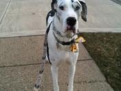 Murphy Sporting His PITTSBURGH STEELER'S CollarDoos