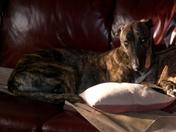 Couch taterhead