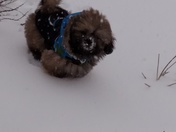 mac loves the snow