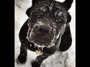 It's a blizzard, Mama!!