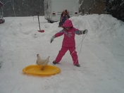 "Some outside fun sledding Miss Olivia and her chicken""Princess"""
