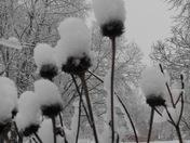 Snow in Camden Point
