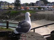 PG Seagulls