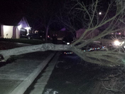 Tree down in Patterson