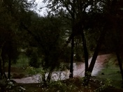 Rain brought stream on Deerwood