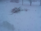 buried 4 foot chain link fence doggie are