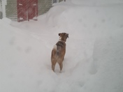 our dog in the backyard