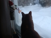 Even vinnie is surprised at the total of snow that accumulated in rye, nh