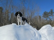 King of the Mountain (OF SNOW)