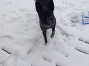 my dog noodles and the snow