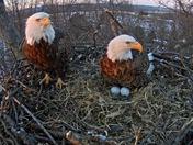 Hanover PA eagle cam