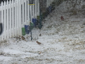 feeding frenzy before 2/21/2015 snow storm ~