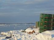 Winter On The Maine Coast