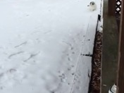 My Cat Loving The Snow In Mt. Airy From Toni Snow In Mt. Airy