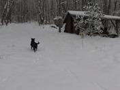 Buddy, Cheech and Bella enjoying the Snow in Balsam Grove, NC