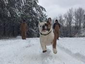 Turbo the bulldog