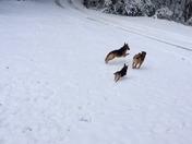 Snow 2015 Rocky, Heidi & Maggie
