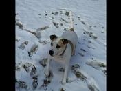 Family dog catching snowballs