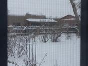Albuquerque snow