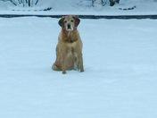 Sadie in snow