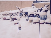 Snow Hoodoos