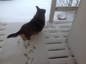 Edgewood Snow : Buster looks for spring