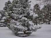 East Mountains Snow