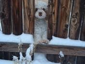 My puppy with a snow beard