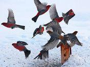pardon us.. we're just a bit flighty!