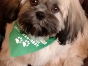 Mac showing off his 1st haircut on his 1st st.patricks day!!!