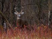 Buck Alert