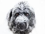 1c. Snowy snowshoe buddy