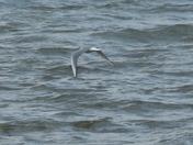 Birding the Susquehanna River