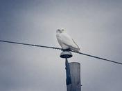 Pole Guardian