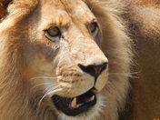 Incredible animals...