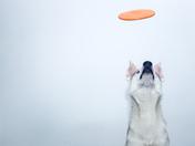 4a. Frisbee
