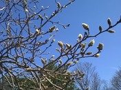 Spring has sprung! Taken at Riverview Park by Erma Pape from Northside!