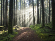 Forest Ligh