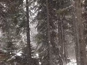 Snowing near Sunnyside!