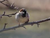 Sparrow enjoying the sunshine.