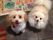 Huxley and Gucci     A before and after photo