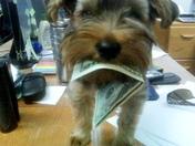 Atticus, the thief